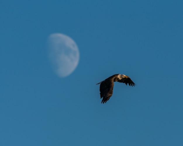 Hermosa foto de un águila volando