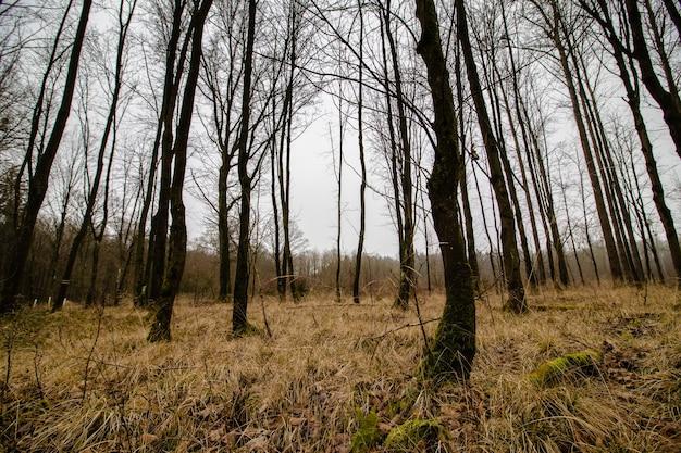 Hermosa foto de un bosque espeluznante con un cielo sombrío