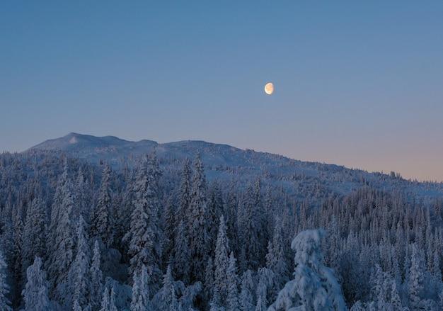 Hermosa foto de un bosque montañoso con abetos y una luna brillante en el cielo