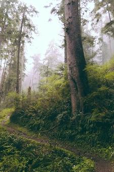 Hermosa foto de un bosque en la noche