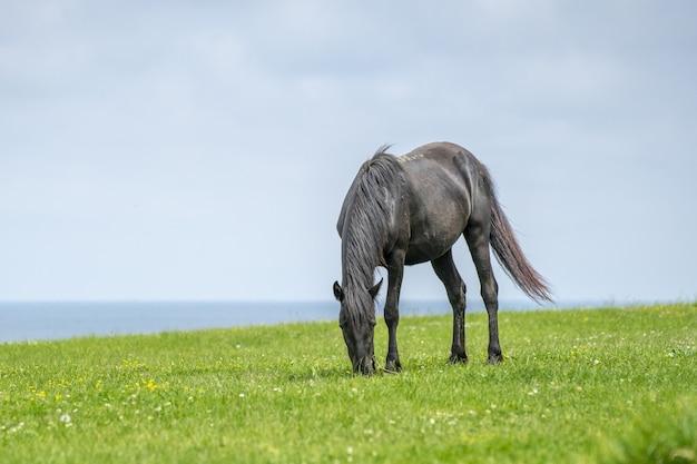 Hermosa foto de un caballo salvaje
