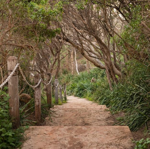 Hermosa foto de un camino de escalera con barandillas de cadena en el parque