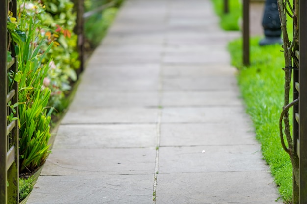 Hermosa foto de un camino en el parque rodeado de hierbas y flores.
