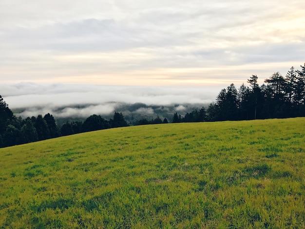 Hermosa foto de un campo con un bosque en el fondo al atardecer
