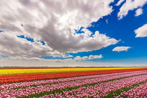 Hermosa foto de un campo con flores de diferentes colores bajo un cielo nublado azul