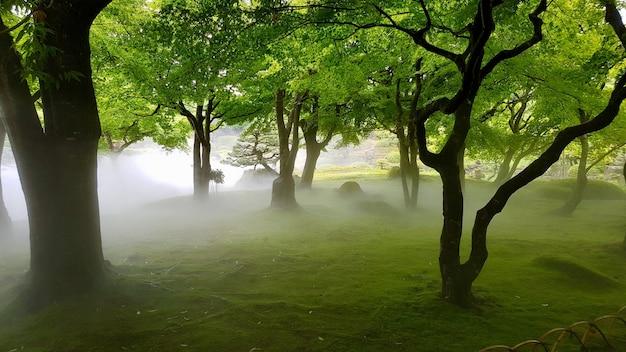 Hermosa foto de un campo de hierba con árboles en la niebla