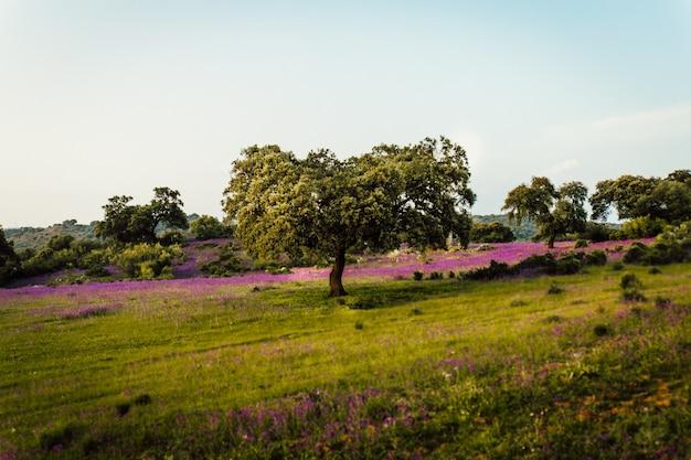 Hermosa foto de un campo de hierba lleno de flores de lavanda y árboles