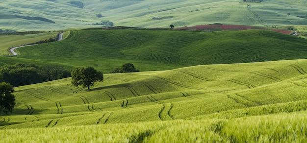 Hermosa foto de campos verdes con caminos estrechos en el medio