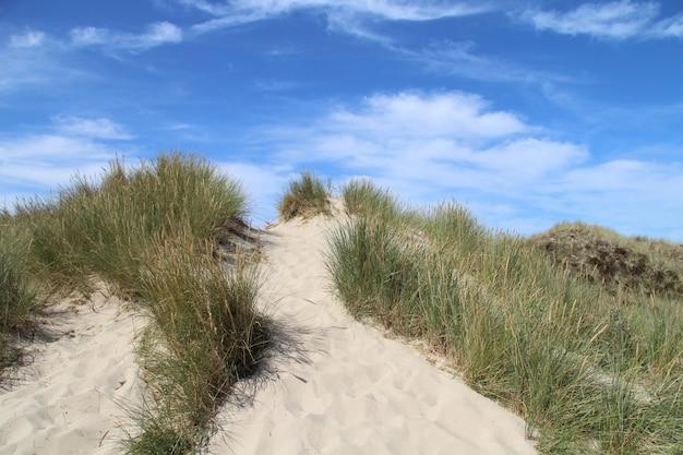 Hermosa foto de una colina de arena con arbustos y un cielo azul