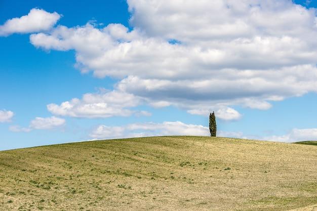 Hermosa foto de una colina cubierta de hierba con un árbol bajo el cielo nublado azul