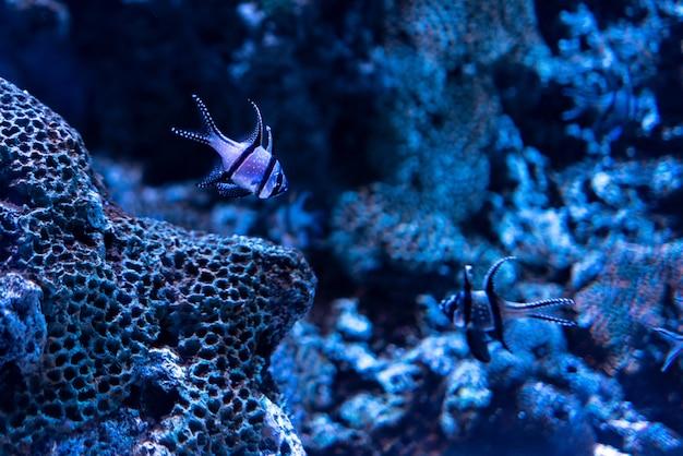 Hermosa foto de corales y peces bajo el océano azul claro