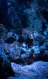 Hermosa foto de corales y pequeños peces de arrecife de coral bajo el océano azul claro