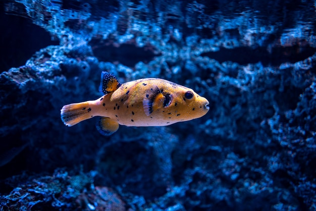 Hermosa foto de corales y un pez naranja bajo el océano azul claro