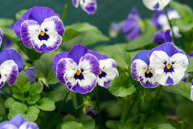 Hermosa foto de flores blancas y púrpuras en el parque en un día soleado
