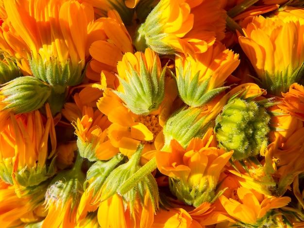 Hermosa foto con flores de caléndula.