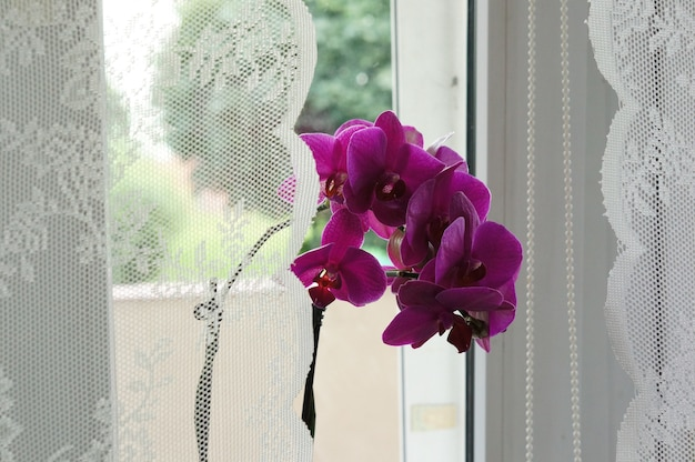 Hermosa foto de las flores púrpuras de la planta cerca de la ventana con cortinas blancas