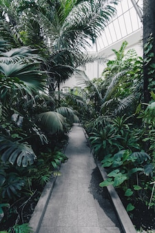 Hermosa foto de un jardín botánico con plantas y árboles tropicales exóticos