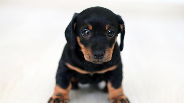 Hermosa foto de un lindo perro pequeño aislado