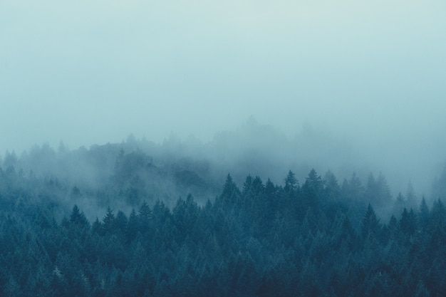 Hermosa foto de un misterioso bosque brumoso y brumoso