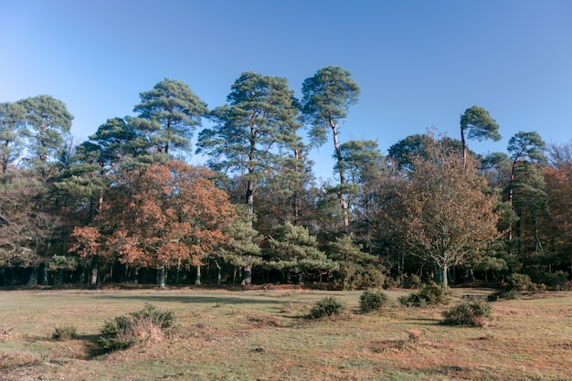 Hermosa foto de muchos árboles en el new forest, cerca de brockenhurst, reino unido