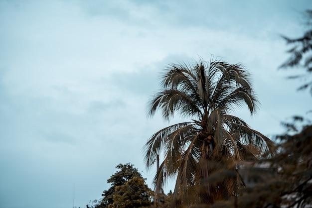 Hermosa foto de una palmera con un cielo nublado en el fondo