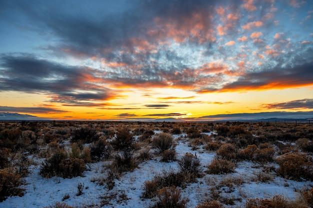 Hermosa foto panorámica de un amanecer sobre un matorral cubierto de nieve