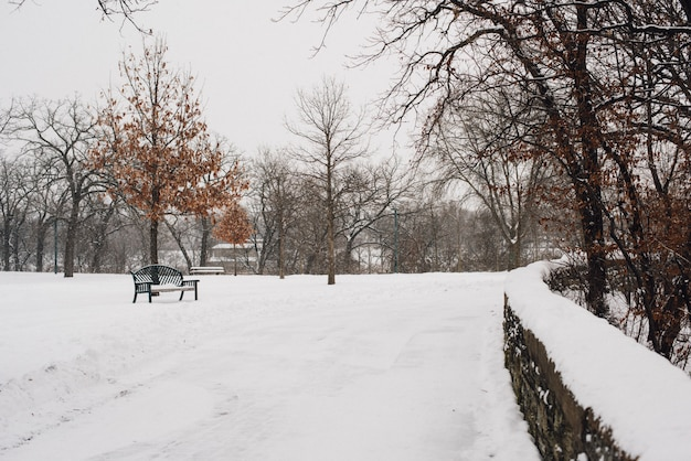 Hermosa foto del parque cubierto de nieve en un frío día de invierno