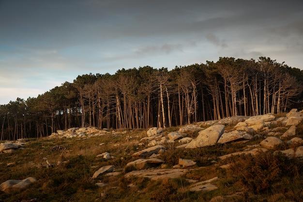 Hermosa foto de piedras y bosque con paisajes de puesta de sol y un cielo nublado