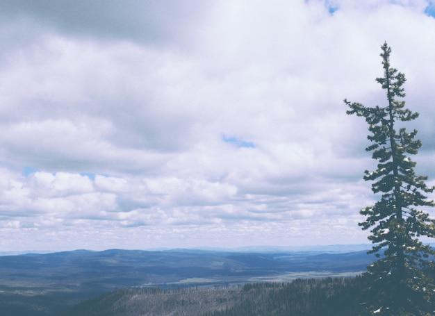 Hermosa foto de un pino con colinas y un cielo nublado increíble