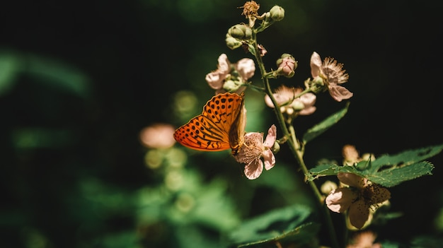 Hermosa foto de una planta floreciente en un bosque con una mariposa bebiendo néctar de ella en un bosque
