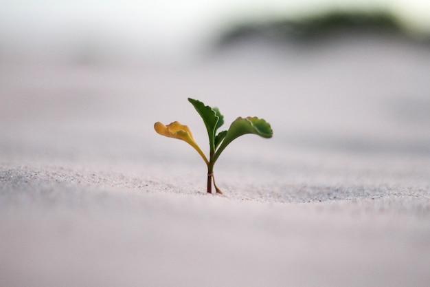 Hermosa foto de primer plano de una planta amarilla y verde en una arena