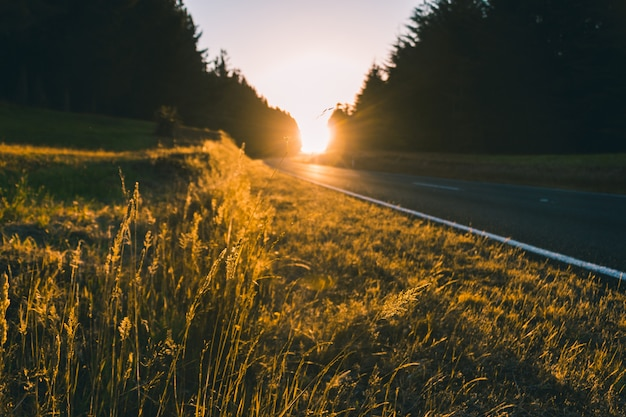 Hermosa foto de la puesta de sol en la carretera con vegetación alrededor