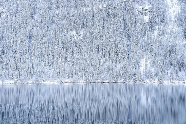 Hermosa foto de un reflejo de árboles cubiertos de nieve en el lago