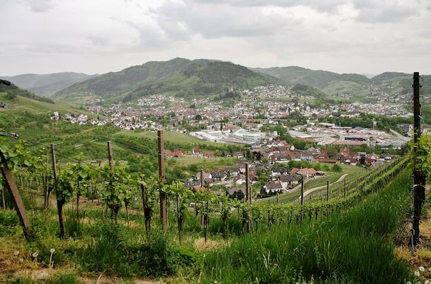 Hermosa foto de viñedos verdes montañosos con el fondo de la ciudad de kappelrodeck