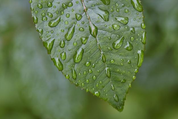 Hermosa gran hoja verde con gotas de agua