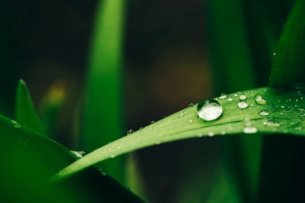 Hermosa hierba verde brillante brillante con gotas de rocío