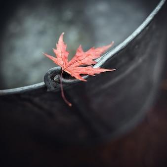 Hermosa hoja de arce roja en el borde de un cubo de lata con agua en otoño