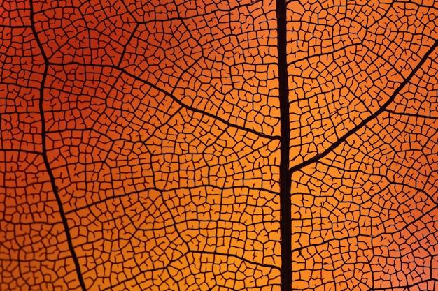 Hermosa hoja de otoño naranja