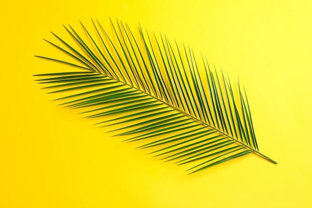 Hermosa hoja de palma sobre fondo de color, vista superior y espacio para texto. planta exótica