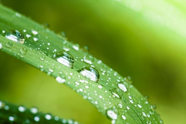 Hermosa hoja verde con gotas de agua, primer plano