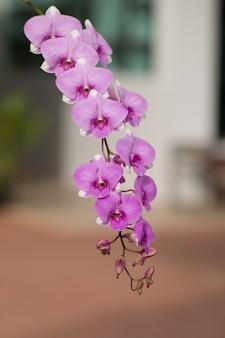 Hermosa imagen al aire libre orquídea floreciente