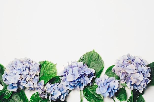 Hermosa lila azul con hojas verdes.
