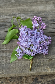 Hermosa lila sobre un fondo de madera