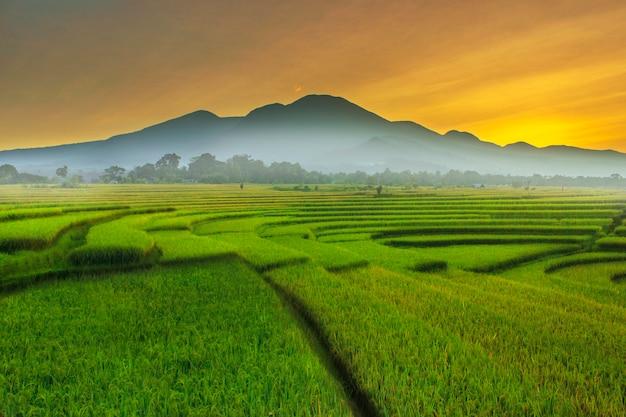La hermosa mañana en los campos de arroz, la luz del sol es muy fresca y el arco iris después de la lluvia