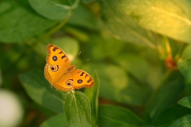 Hermosa mariposa de ala abierta amarilla sobre fondo verde
