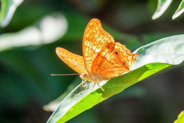 Hermosa mariposa amarilla sentada en una hoja