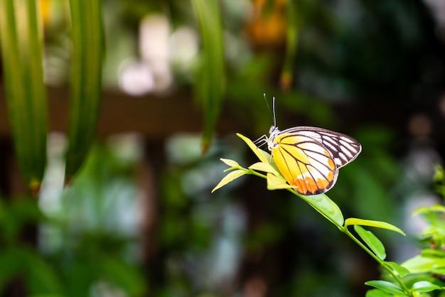 Hermosa mariposa en el árbol