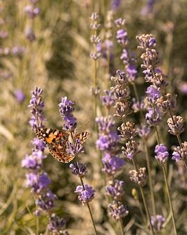 Hermosa mariposa en concepto de naturaleza