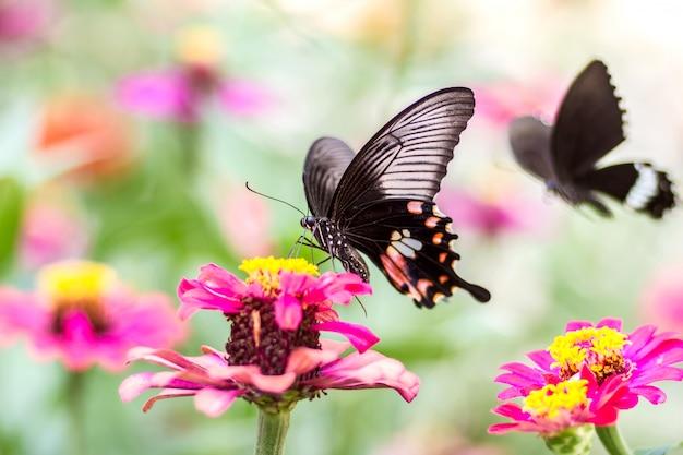 Hermosa mariposa en flor y fondo borroso