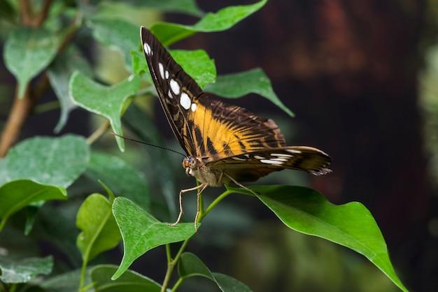 Hermosa mariposa en hábitat natural